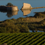 vini di sicilia go wine 2019