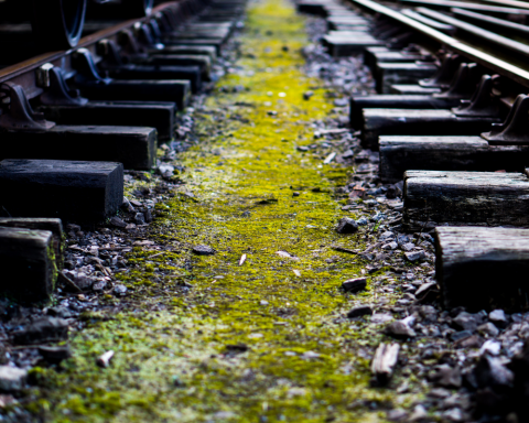 Vinitaly 2019 treno