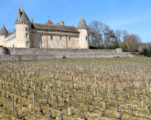 vendemmia 2019 scarsa in Borgogna