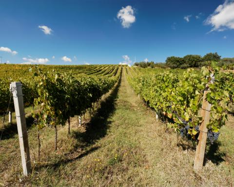 Indicazione Umbria vini Montefalco